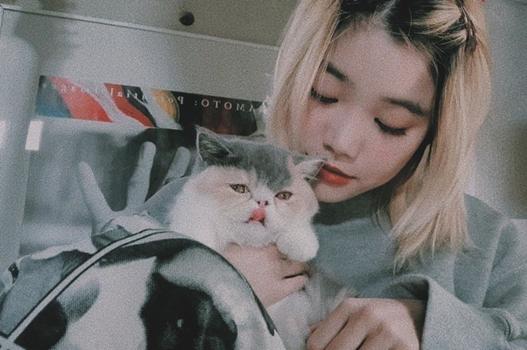 セントチヒロチッチと猫